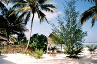Typical Zanzibar Beach - Coconuts trees and white sand
